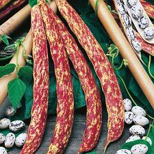 Seeds Giant 20g Beans Borlotto Bush Organic Heirloom Russian Ukraine