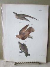 Vintage Print,BIRDS,CHIMNEY SWALLOW,WHIPPOORWILL NIGHTHAWK,Zoology,NY,Fauna,1844