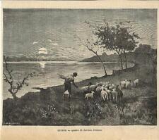 Stampa antica GREGGE di PECORE SULLA RIVA al tramonto 1886 Old antique print
