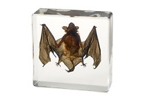 bat Taxidermy Collectio nembedded In Clear Lucite Block Embedding Specimen