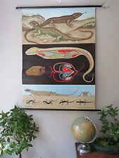 Original Vintage Jung Koch quentell desplegable tabla de tiza de la escuela de lagartos