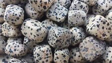 DALMATIAN JASPER TUMBLED STONE (1)  MEDIUM/LARGE NATURAL TUMBLE STONE