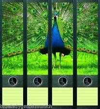 File Art 4x Ordner-Etiketten PEACOCK ★ Pfau RÜCKENSCHILDER Sticker 018