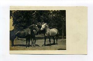 Antique RPPC photo postcard, two draft? horses