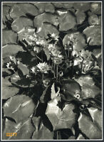 Larger size Vintage signed Photograph, still life w flowers, by LENGYEL 1940