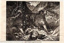 Antique print St. Bernard (dog) / Sint-Bernard hond houtgravure 1835