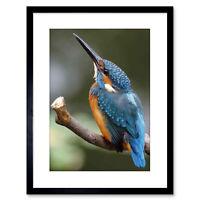Photo Nature Animal Bird Kingfisher Colourful Framed Print 9x7 Inch
