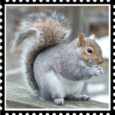 30 Custom Cute Squirrel Stamp Art Personalized Address Labels