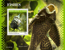 Sierra Leone 2019  fauna fishes  S201911