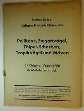 Naumann: pelícanos, fregattvögel gaviotas Tropik-pájaros pájaro 32 paneles
