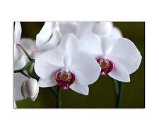 120x80cm Wandbild auf Leinwand white orchids Nahaufnahme Orchidee Sinus Art
