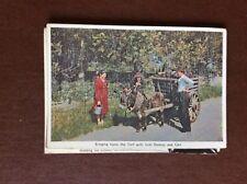 F1e postcard unused bringing home the turf ireland donkey