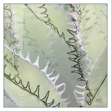 """Agave Abstract 12"""" x 12"""" Fine Art Print, Pastel Green Color, Desert Abstract Art"""