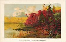 Indian Summer Laubfärbung 1900 Lexikon-Lithographie Indianersommer Rotfärbung