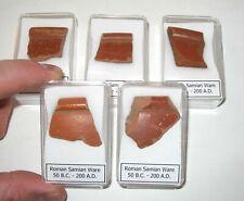 Roman Samian Ware Terra sigillata fragmento de cerámica pieza de llanta en caso de exhibición