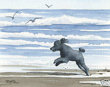 BLACK POODLE AT THE BEACH Dog Watercolor 8 x 10 ART Print Signed by Artist DJR