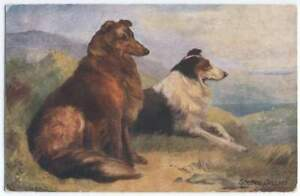 SCOTCH COLLIE. Old and vintage postcard (1)
