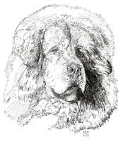 Tibetan Mastiff Print