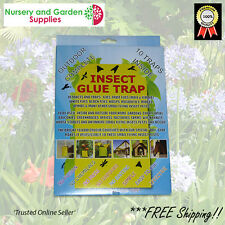 Sticky Trap - INSECT GLUE TRAP - Pack of 10 - bug Mat, Fruit fly etc