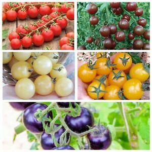 Seeds Cherry Tomato Red Black White Yellow Rare Vegetable Organic Heirloom