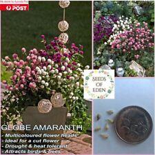 50 GLOBE AMARANTH SEEDS(Gomphrena globosa); beautiful multicolour flowers