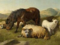 PAINTING ANIMAL GOAT SHEEP PONY HORSE ANSDELL ART PRINT POSTER LAH401A