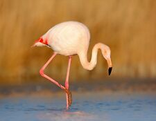 METAL FRIDGE MAGNET Pink Flamingo Standing In Water Leg Raised Bird Birds