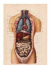 Vintage Medical Anatomy Human Organ Illustration Chart Real Canvas Art Print New