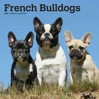 French Bulldogs 2020 - 16 Month Square Wall Calendar