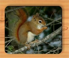 CHIPMUNK IN CANADIAN FOREST PINE TREE MOUSE PAD -ojn8Z