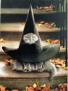 Avanti Happy Halloween Greeting Card Cat Best Witches Witch Hat Funny Cute NEW