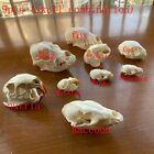9 pcs combination Unique real Taxidermy Skull Collection,specimen, decorations