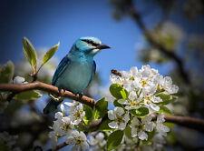 ANIMAL PHOTO BIRD BLUE JAY POSTER WALL ART PRINT PICTURE  LF2868