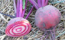 CANDY CANE BEET * HEIRLOOM* 50 SEEDS *SWEETER THAN PURPLE BEETS*