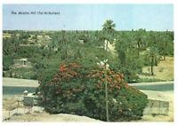 The Jericho Hill (Tel-Al-Sultan), Israel, Palestine Rare Picture Postcard