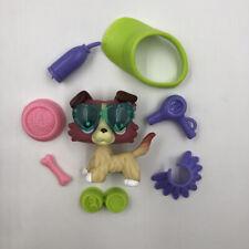 Littlest Pet Shop LPS 1262 Gift Cream Collie Dog Curl Hair Random Accessory Rare