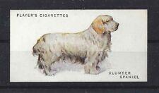 1931 Uk Arthur Wardle Dog Art Body Study Player Cigarette Card Clumber Spaniel