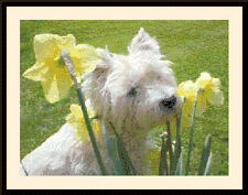 Westie & Daffodils, Cross Stitch Kit