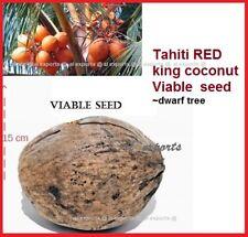 1 RED TAHITI ~KING Coconut seed-Dwarf LIVE SEED Harvest in 2 yrs >Cocos Nucifera