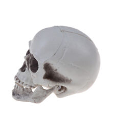 Human Skull Decor Prop Skeleton Plastic Head Halloween Coffee Bars Ornament cn