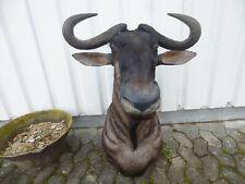Streifengnu / Blue Wildebeest / Trägerpräparat / Antilope / Dekoration / Afrika