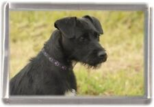 Patterdale Terrier Fridge Magnet No 7 by Starprint