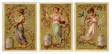 Full Set, Liebig (OXO) S094, Girls in Branches (X6) 1878 VG (Gu337-322)