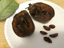 Fresh Diospyros Nigra Black Sapote Persimmon Chocolate Pudding Fruit Seeds.