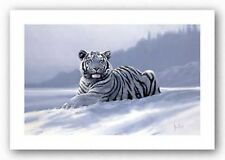 ART PRINT Siberian Tiger Spencer Hodge