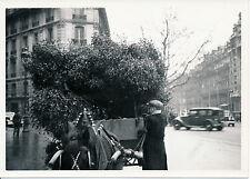 PARIS c. 1935 - Petits Métiers Marchand de Gui - P 758