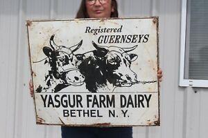 "Vintage Yasgur Dairy Farm Guernseys Milk Cow Feed & Seed Gas Oil 24"" Metal Sign"