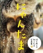 NEW Nyantama Cat Testicles Photo Book