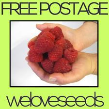LOCAL AUSSIE STOCK - Giant Raspberry, Fruit Tree Plant Seeds ~10x FREE SHIPPING