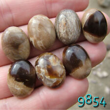 Parcel Lot 7 cabochons Petrified Wood TEXAS 20x15 OVAL cabs